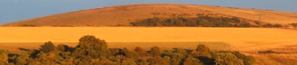 South Downs Land Managers